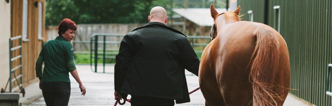 horsetrotup